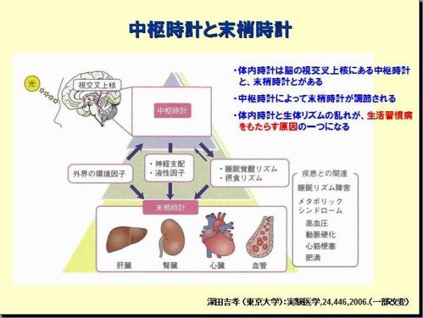1-中枢神経と末梢神経